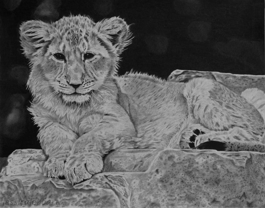 fine art graphite pencil drawing lion cub