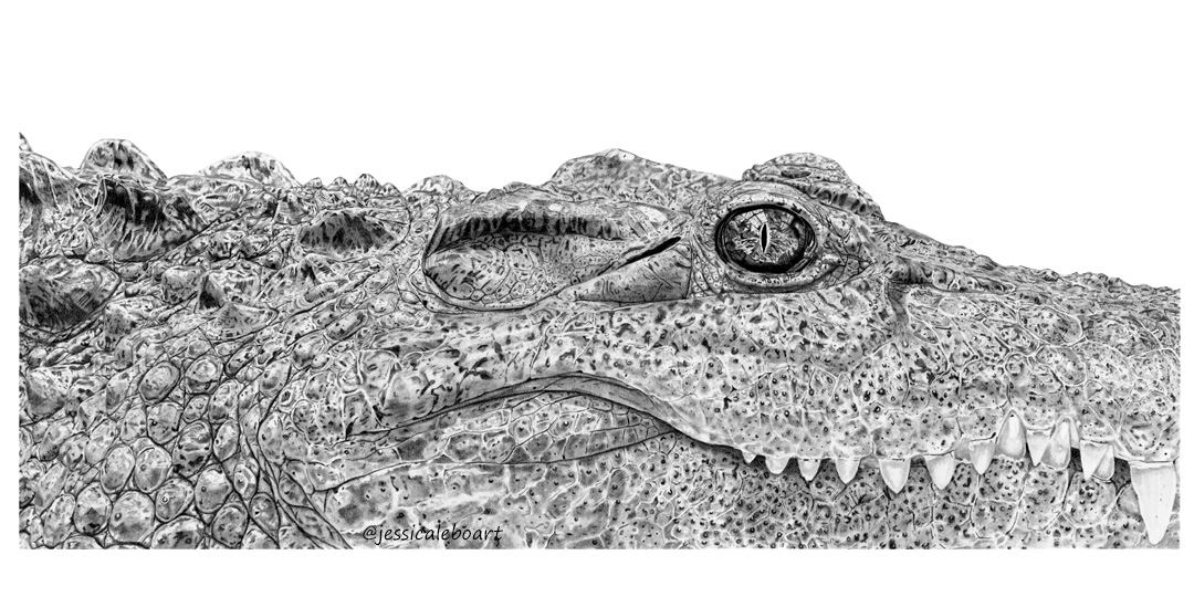 graphite pencil drawing animal crocodile