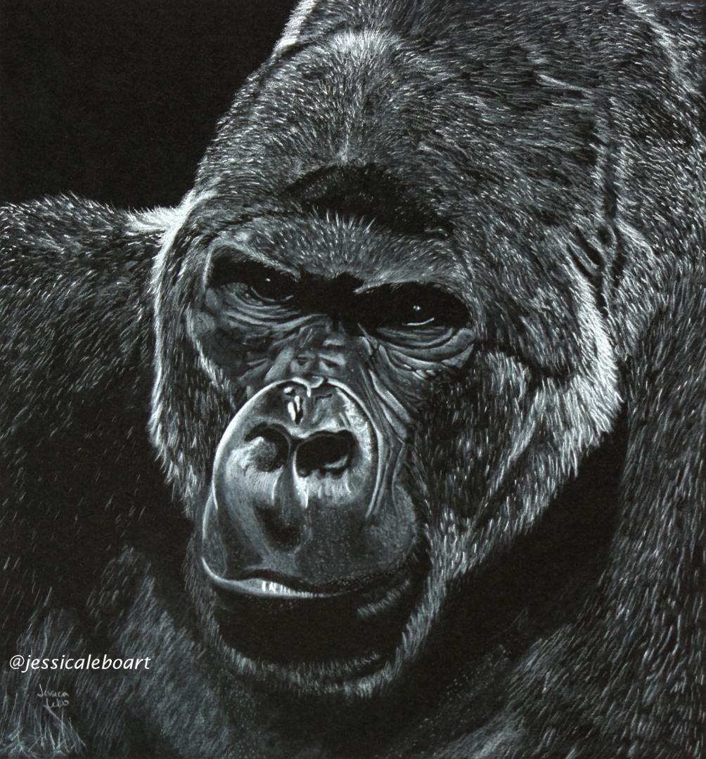 fine art white charcoal pencil drawing on black paper animal gorilla