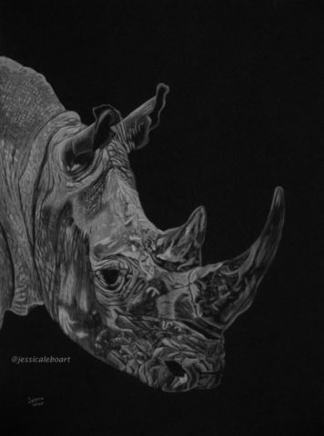 fine art white charcoal pencil drawing rhino on black paper