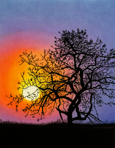 fine art colored pencil drawing sunset through tree