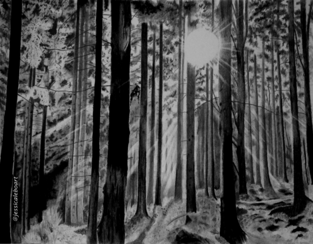 graphite and carbon pencil drawing sun through trees