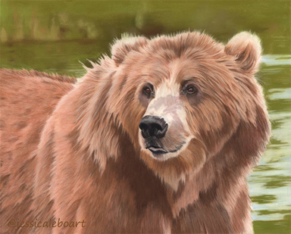 realism pastel drawing bear fine art