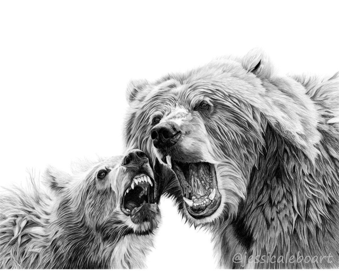 animal art graphite pencil drawing baby bear cub