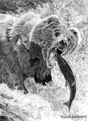 animal art graphite pencil animal drawing fine art bear catching fish artwork