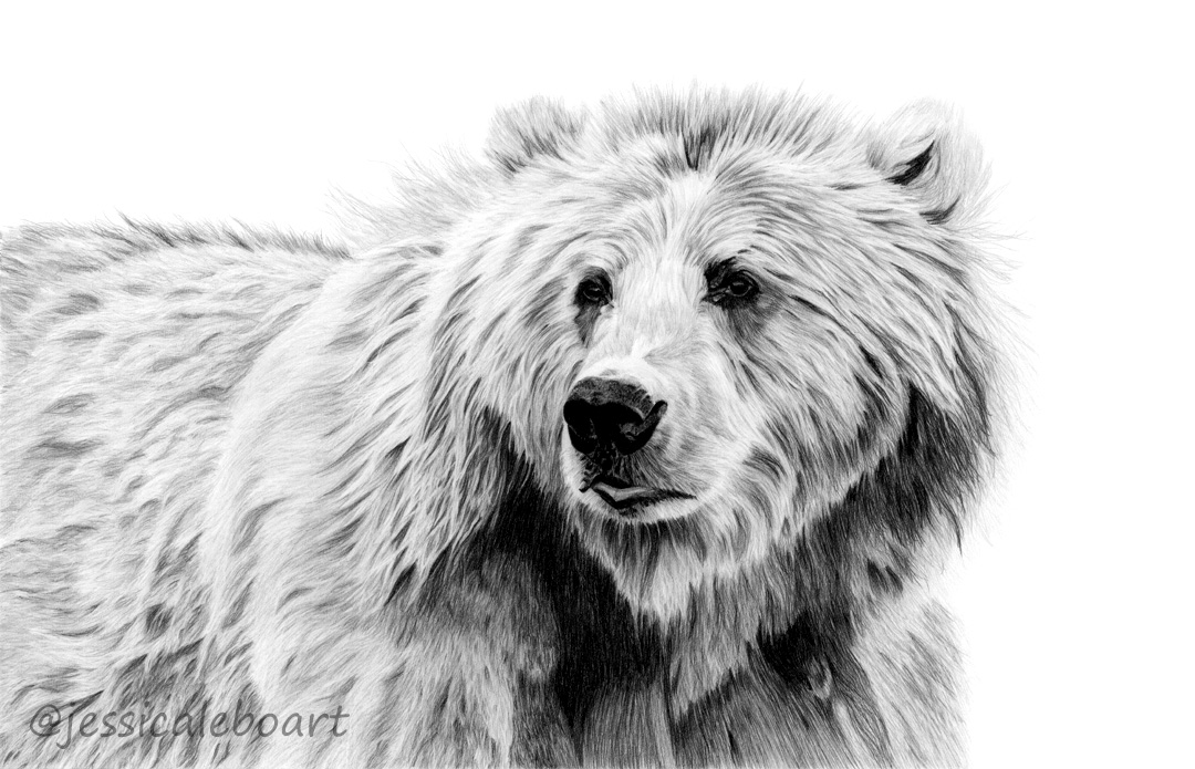graphite pencil animal realistic art drawing fine art