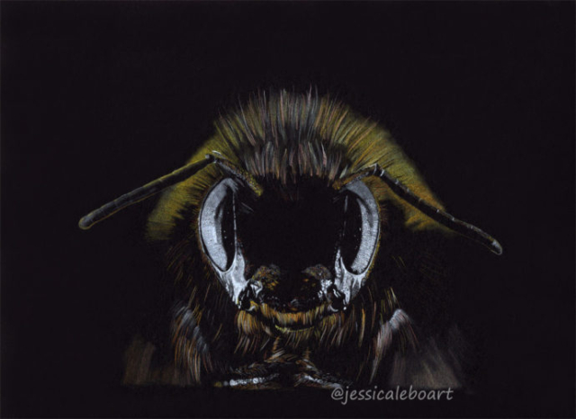 colored pencil drawing on black paper bee