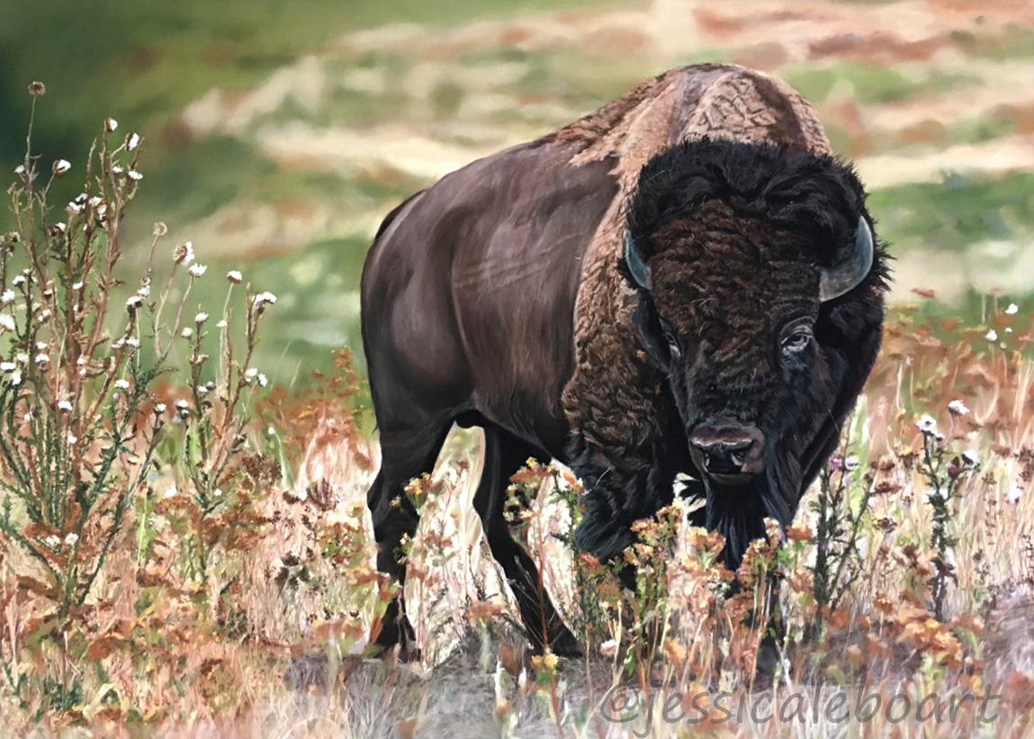 pastel painting drawing bison realistic art