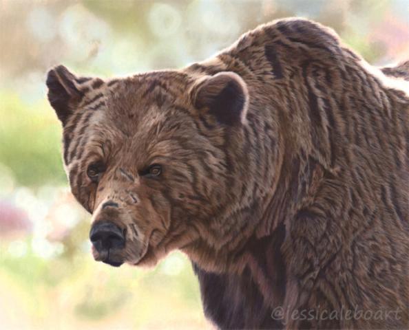 animal art brown bear pastel pencil realism drawing
