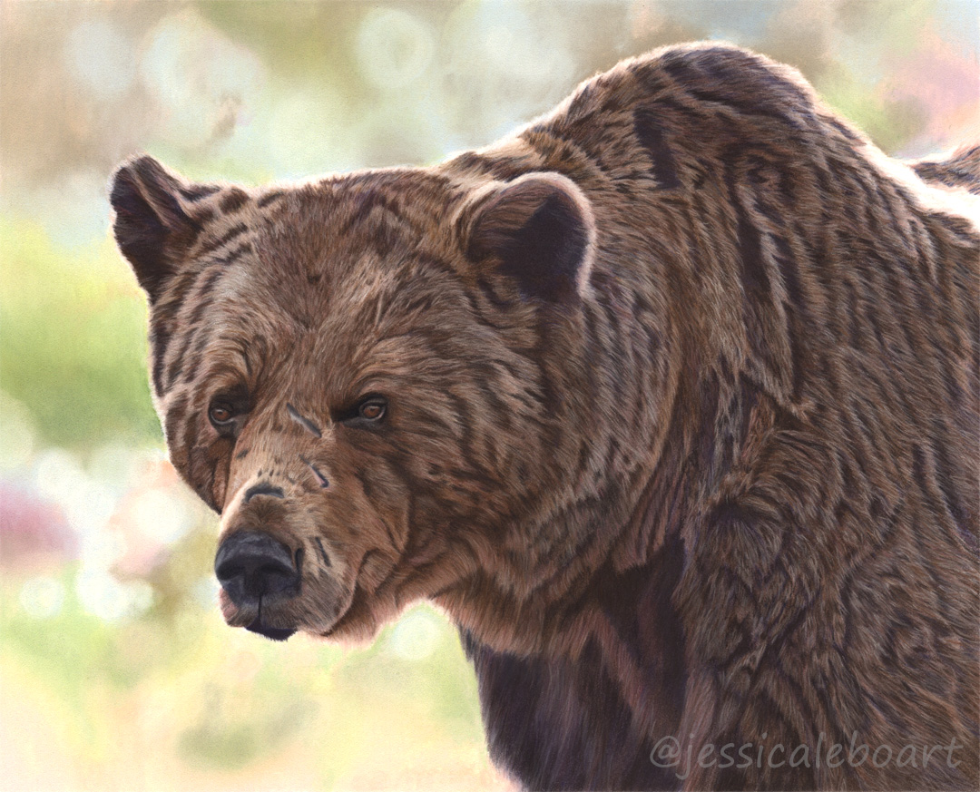 animal art brown bear pastel pencil realism drawing