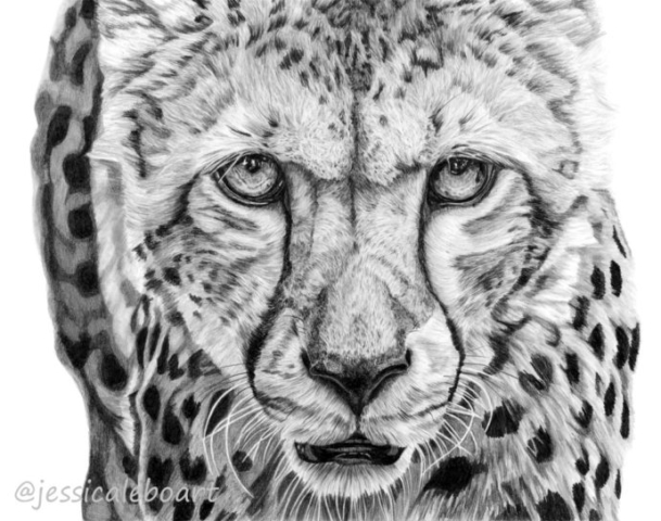 wildlife fine art graphite pencil drawing realistic