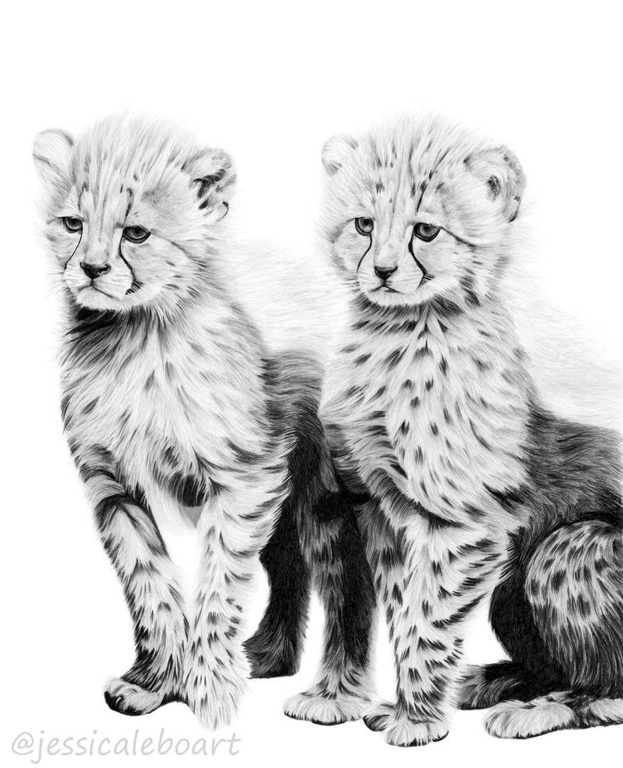 cheetah graphite pencil drawing baby cubs animal art artwork