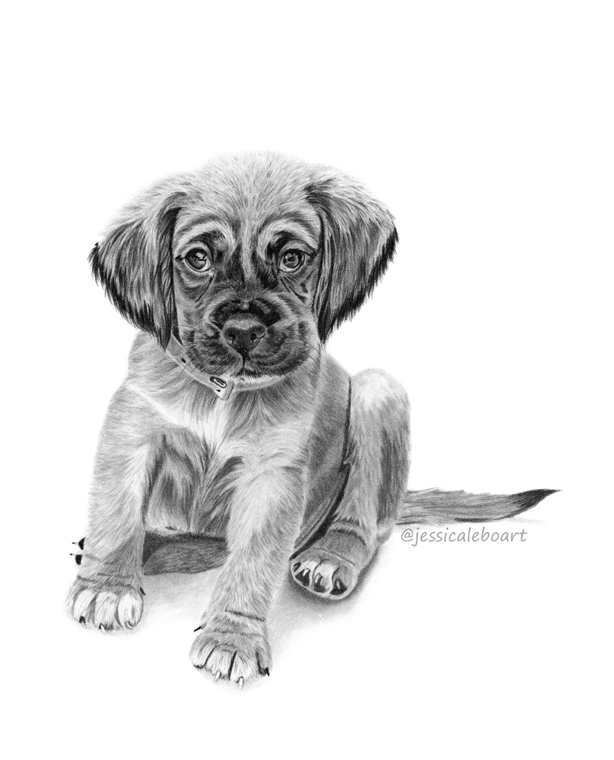 fine art graphite pencil animal drawing cute puppy dog portrait