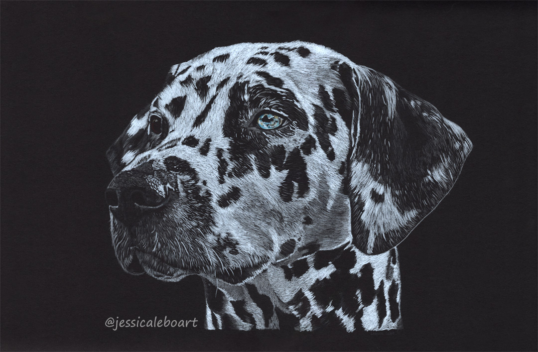 colored pencil on black paper drawing dalmatian dog