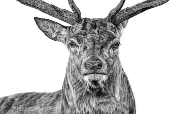 wildlife artwork graphite pencil drawing