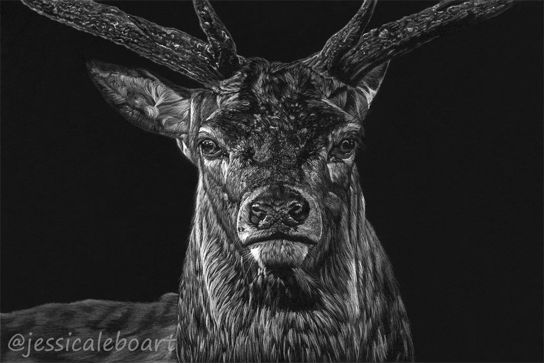 white pencil on black paper deer drawing