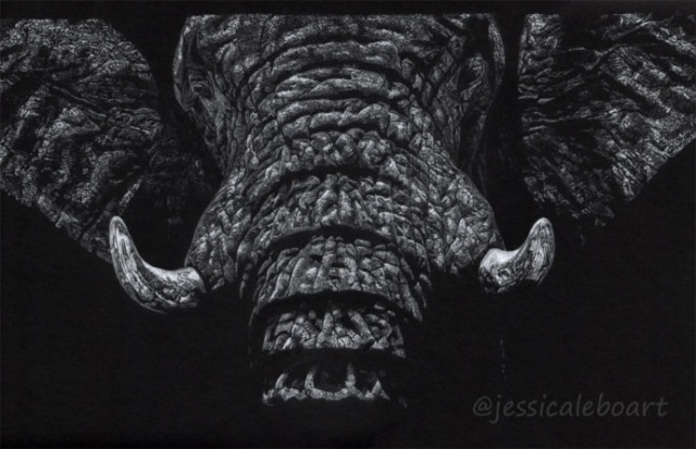 wildlife art realism white on black paper drawing