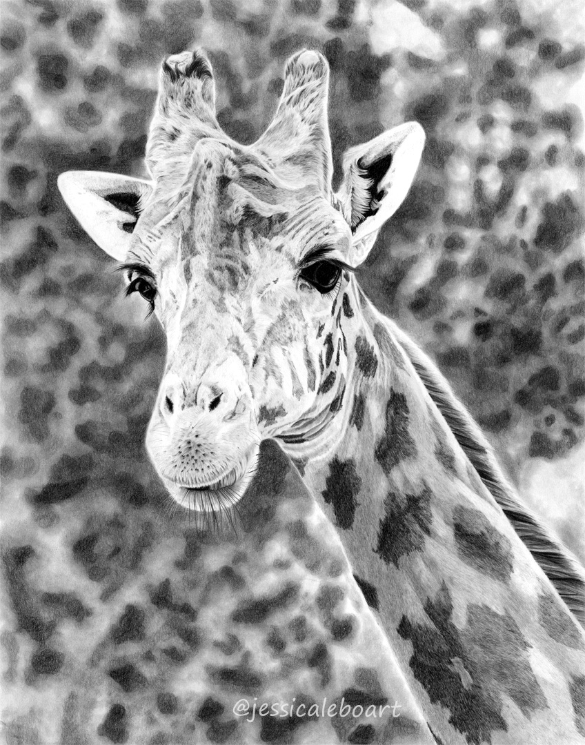 giraffe pencil drawing graphite animal artwork