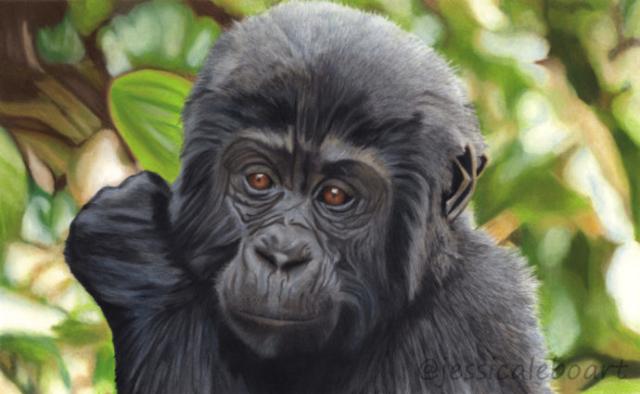 realistic pastel pencil animal drawing baby gorilla art