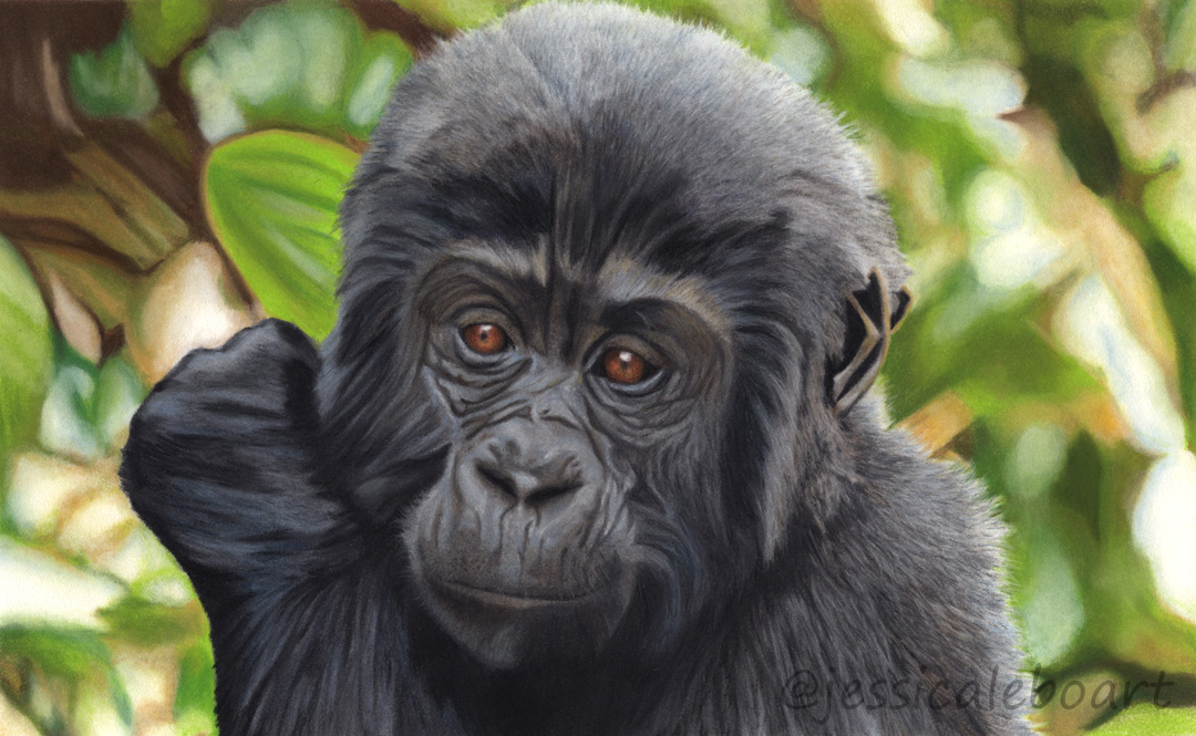 realistic pastel pencil animal drawing baby gorilla art