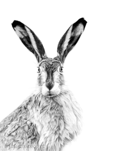 animal art hare rabbit graphite pencil realistic artwork drawing