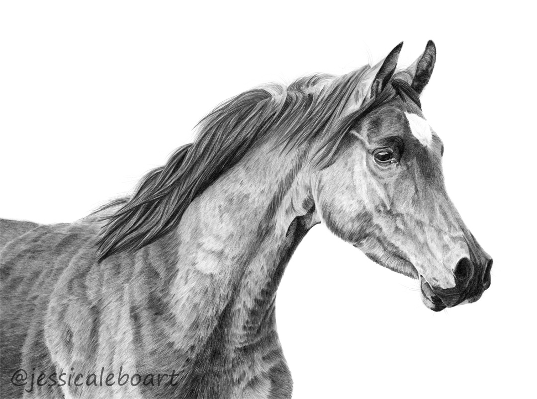 graphite pencil drawing horse