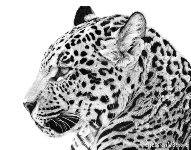 realistic graphite pencil big cat drawing animal art