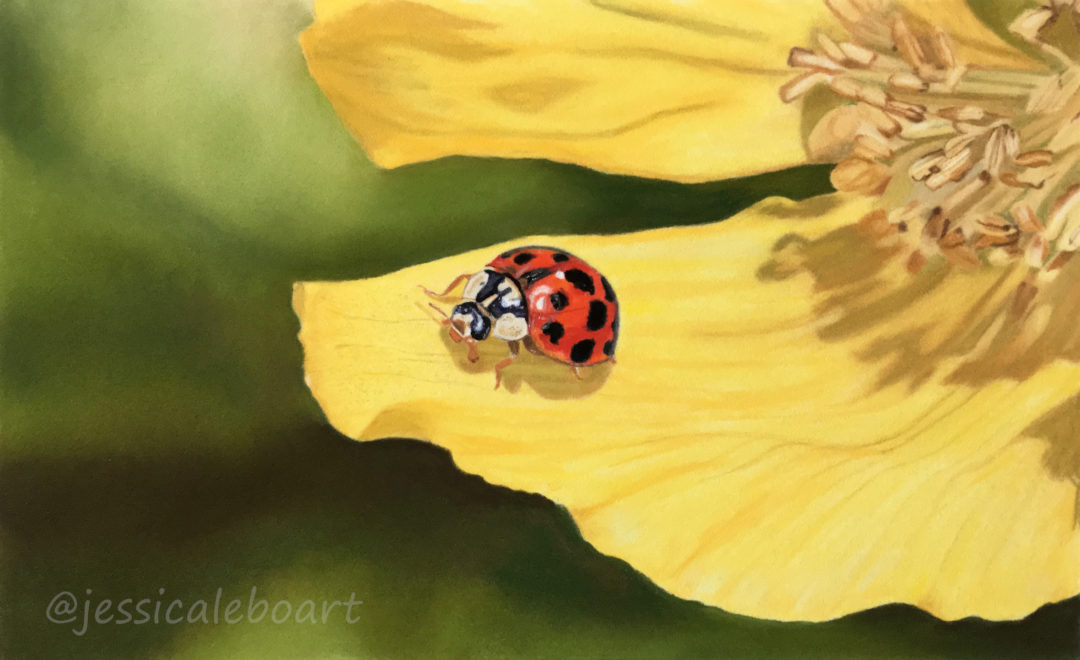 ladybug ladybird pastel pencil insect drawing
