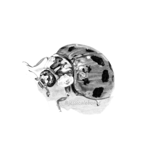 animal art bug insect drawing realism graphite pencil