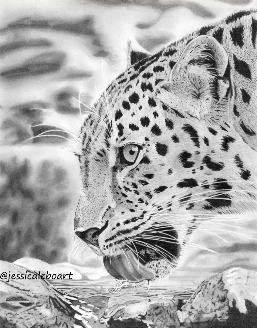 fine art graphite pencil animal drawing leopard drinking