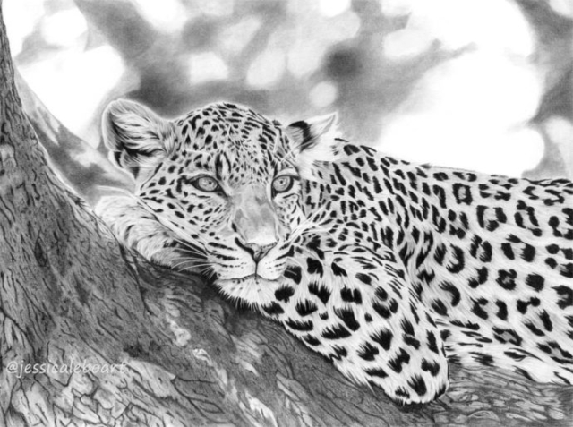 fine art graphite pencil animal drawing leopard