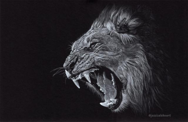 fine art colored pencil on black paper angry lion growl portrait