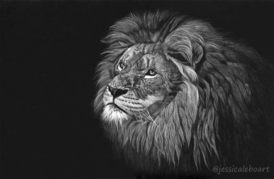 colored pencil white on black paper lion big cat drawing