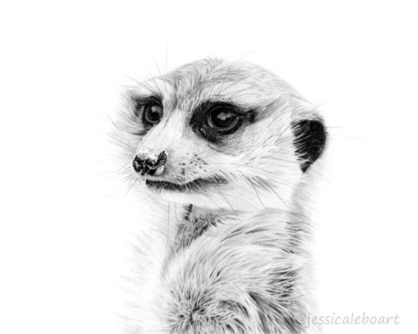 graphite pencil wildlife realism drawing painting animal art