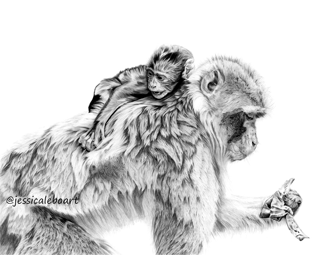 graphite pencil animal drawing monkey and baby artwork