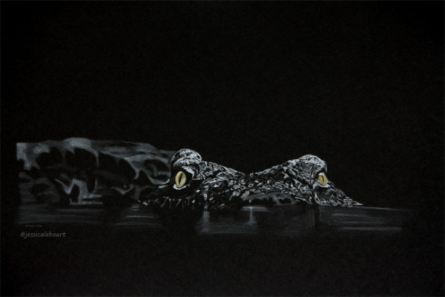 fine art crocodile colored pencil drawing on black paper