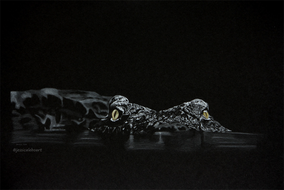 fine art colored pencil drawing on black paper crocodile at night