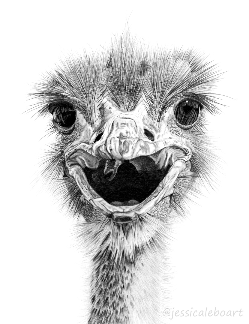 graphite pencil realism drawing bird ostrich emu