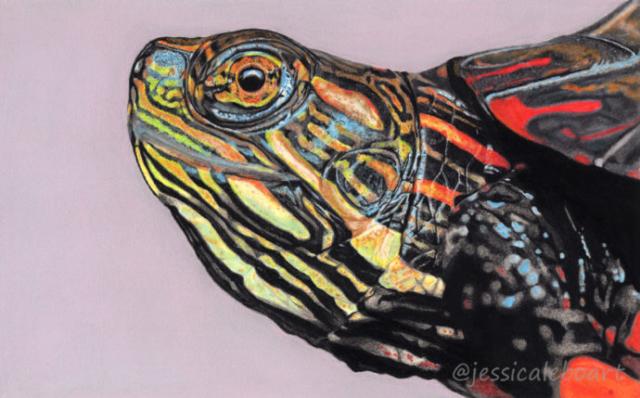 wildlife art painting pastel pencil drawing animal realism