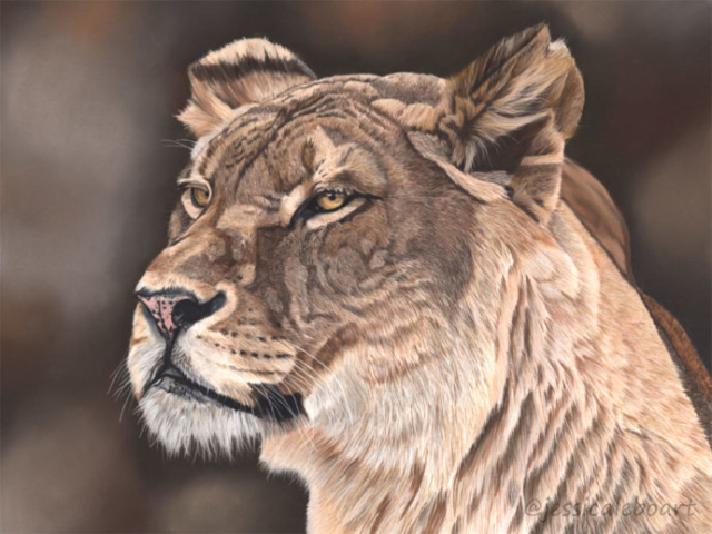 realistic pastel wildlife animal drawing