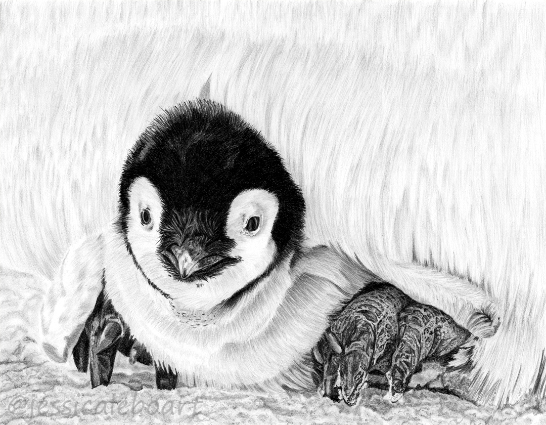 graphite pencil realism drawing bird penguin animal