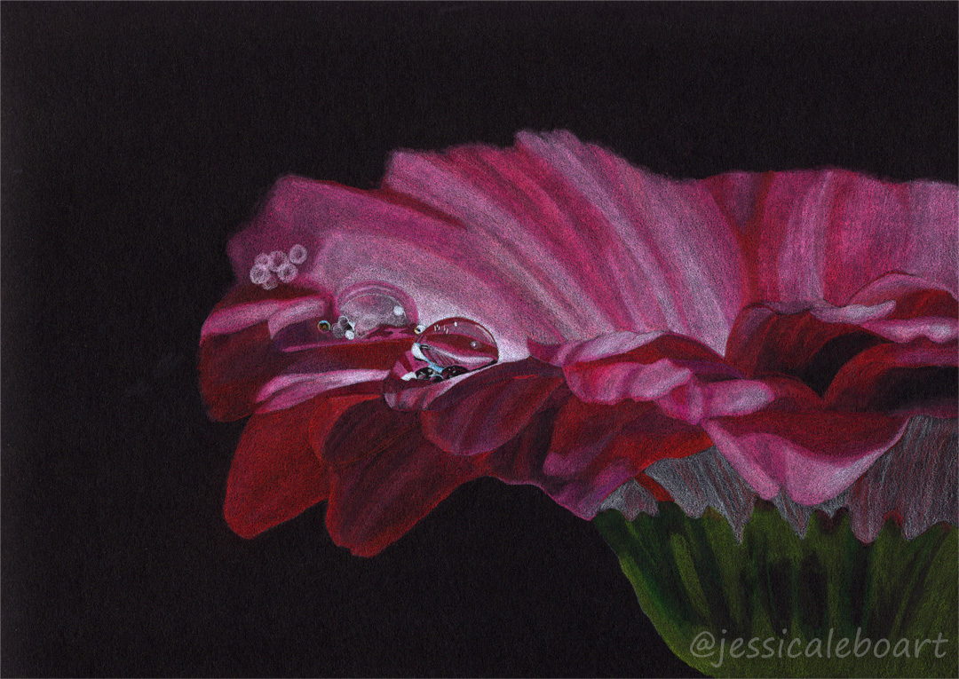 colored pencil on black paper drawing pink flower