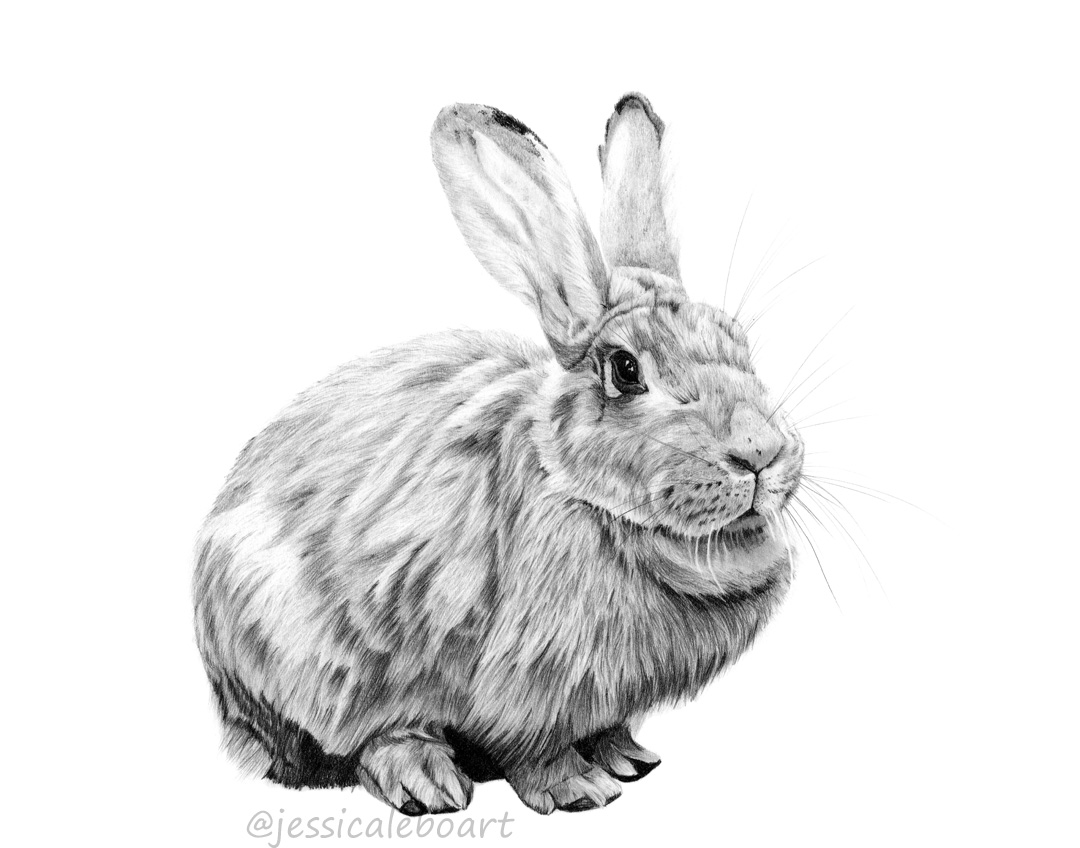 rabbit pencil drawing graphite bunny artwork