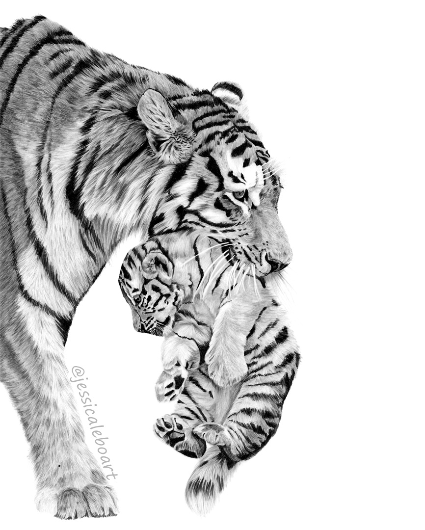 animal art graphite pencil drawing tiger cub and mother