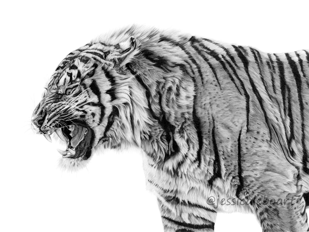 wildlife art realism graphite pencil drawing