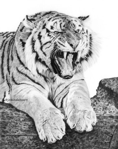 fine art graphite pencil animal drawing tiger growling