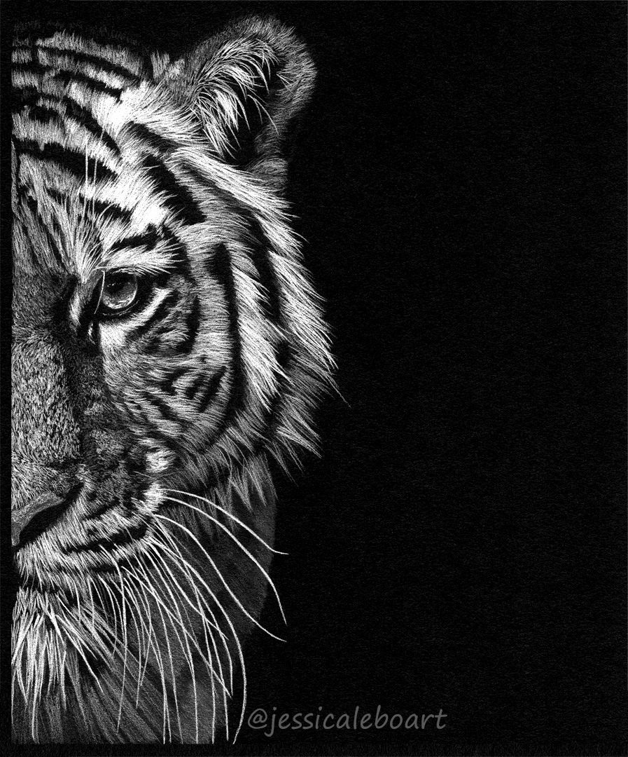 tiger drawing black paper colored pencil white pencil