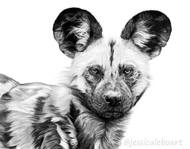 animal art african wild dog graphite pencil drawing
