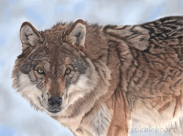 wildlife art painting realism pastel wolf drawing