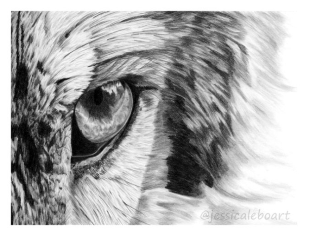 wolf eye pencil drawing graphite